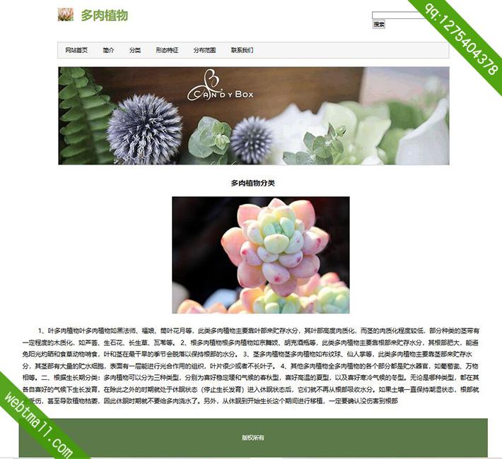 多肉植物网页设计作业
