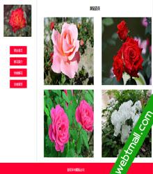 月季花主题网站网页设计作业成品下载